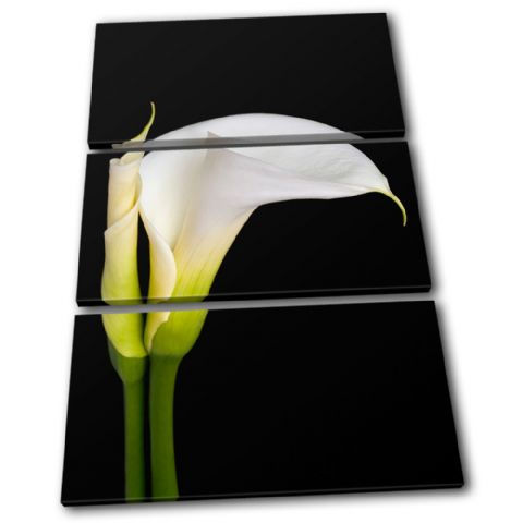 Calla Lily Flowers Floral - 13-1233(00B)-TR32-PO